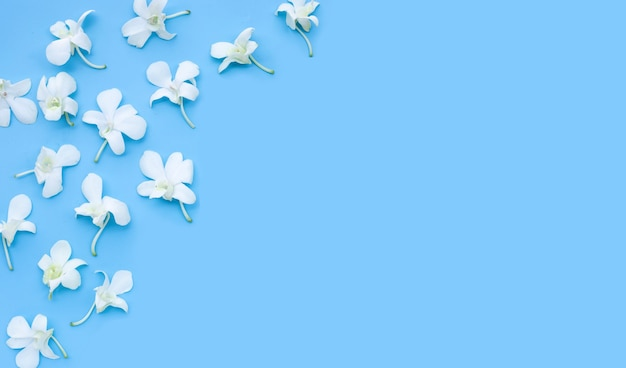 Mooie witte orchideebloemen op blauwe achtergrond.