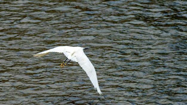 Mooie witte reiger die op een rivier in sochi . vissen
