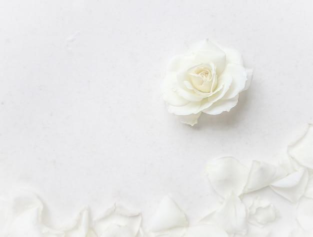 Mooie witte roos en bloemblaadjes op witte achtergrond ideaal voor wenskaarten voor bruiloft verjaardag