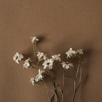 Mooie witte wilde bloem op diep neutraal pastel beige bruin