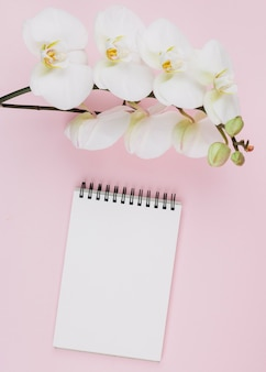 Mooie zachte tak van witte orchideebloemen over de lege spiraalvormige blocnote tegen roze achtergrond