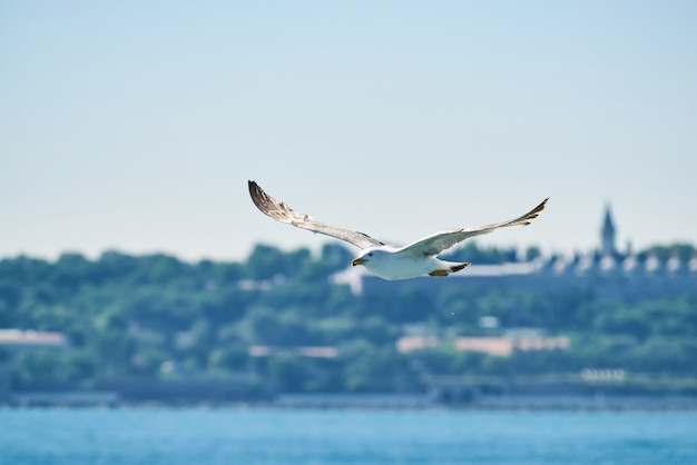 Mooie zeemeeuw die in de lucht vliegt