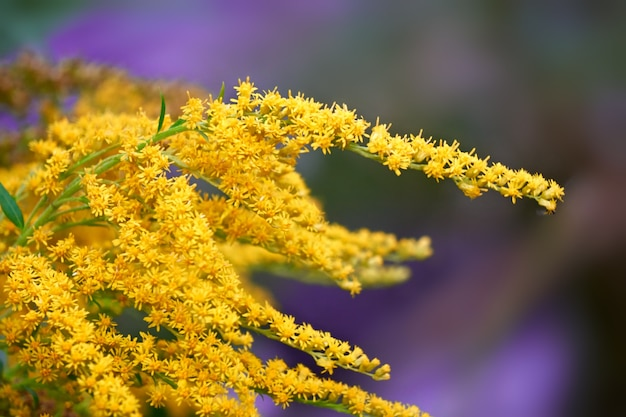 Mooie zomerbloem. abstracte achtergrond van bloemen