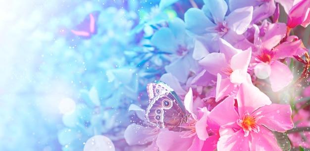 Mooie zomerbloemen en tropische vlinders webbanner voor website met zachte focus getinte afbeelding
