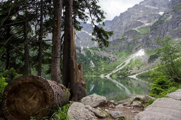 Mooie zomerse alpine bergmeer uitzicht bedekt met groene bomen en een val boom en stenen aan de voorkant. weerspiegeling van de berg in het water. kristal helder water. europa, alpen.