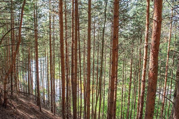 Mooie zomerse bos met verschillende bomen