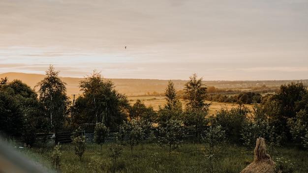 Mooie zomerse landschap bij zonsondergang. dorp in oekraïne, karpaten