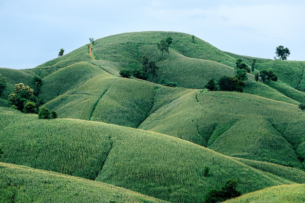 Mooie zomerse landschap maïsveld zonnige dag