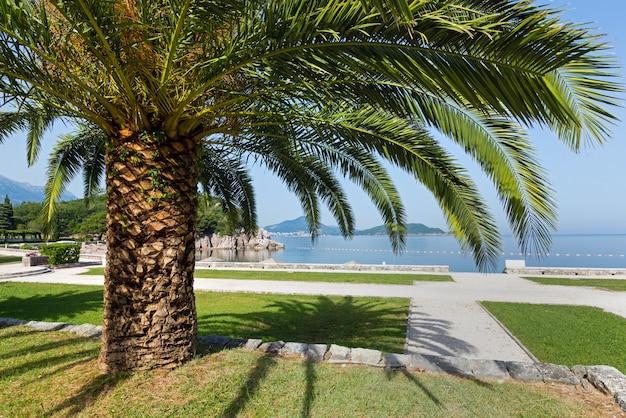 Mooie zomerse ochtend uitzicht op het park met palmboom in de buurt van strand (montenegro, budva)