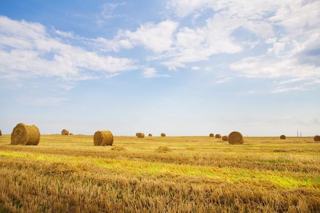 Mooie zomerse tarweveld met liggende ronde balen, blauwe lucht met wolken