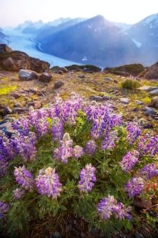 Mooie zomerse weide in de bergen, alaska, vs