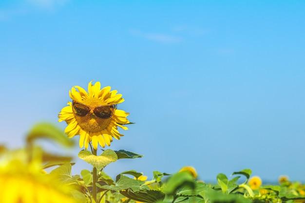 Mooie zonnebloem in zonnebrilbrillen tegen de zonnebloemen op gebied