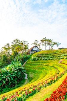 Mooie zonsopganghemel met tuin op berg in huai nam dang national park