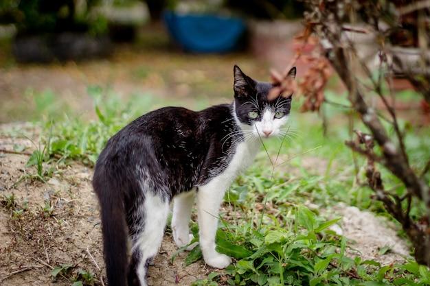 Mooie zwart-witte kat die van dichtbij in de tuin is ontsproten