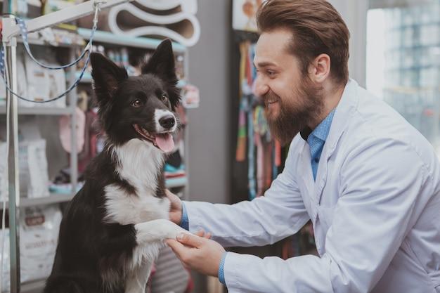 Mooie zwarte hond die door professionele dierenarts in het dierenziekenhuis wordt onderzocht