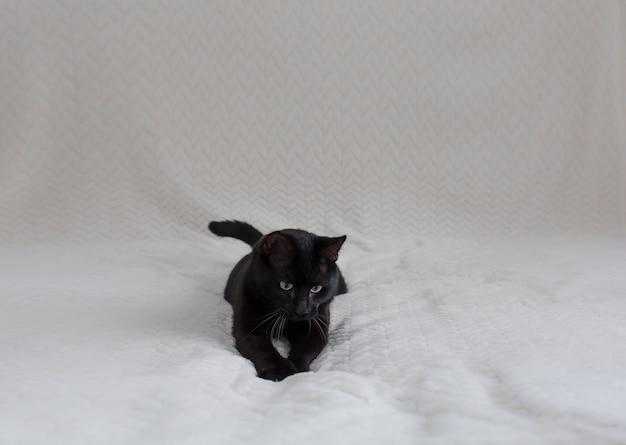 Mooie zwarte kat ligt op een beigewitte bank