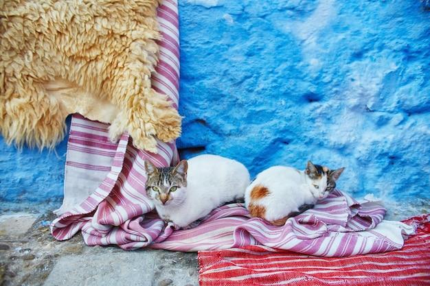 Mooie zwerfkatten slapen en lopen in straten van sprookjesachtige straten van marokko en katten die erop leven. eenzame dakloze katten