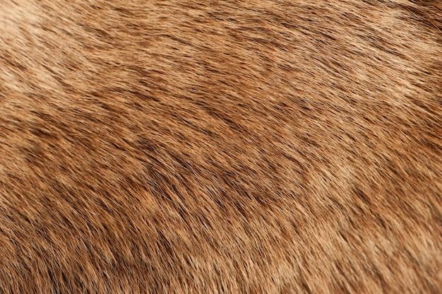 Moose coat