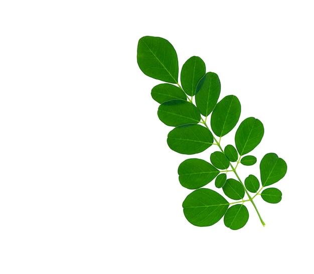 Moringa blad geïsoleerd op een witte achtergrond.