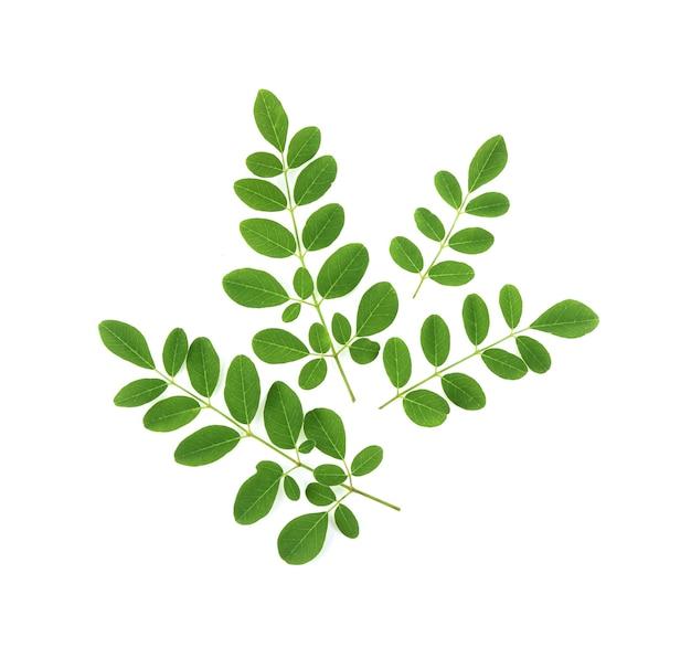Moringa-bladeren hebben geneeskrachtige eigenschappen. bovenaanzicht