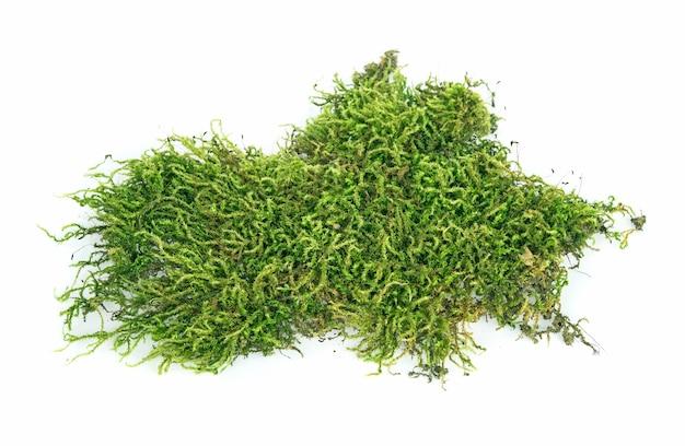 Mos, groen mos geïsoleerd op een witte achtergrond