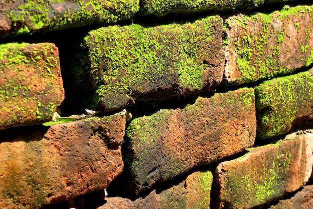 Mos op baksteen blokkeert achtergrond