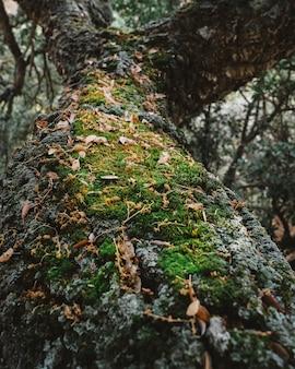 Mos op boom in bos