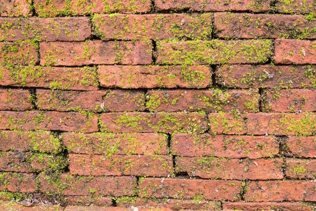 Mos op de muur