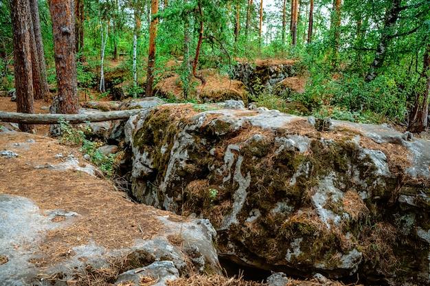 Mos op de rotsen in het wilde bos