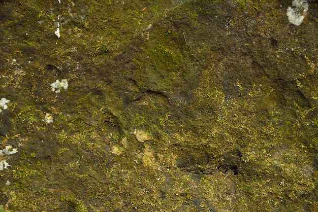 Mos op steen in de natuur