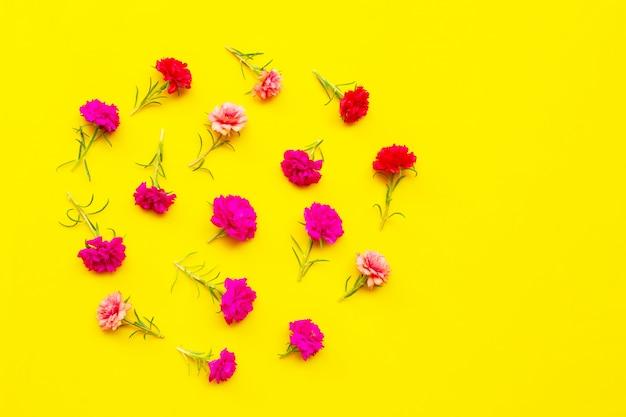 Mos-roos op gele achtergrond. bovenaanzicht