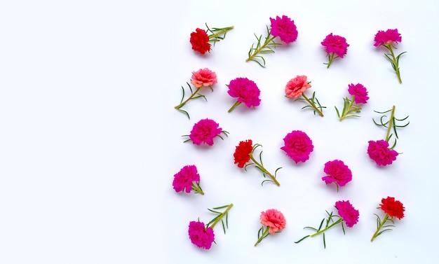 Mos-roze bloem op geïsoleerd wit. bovenaanzicht