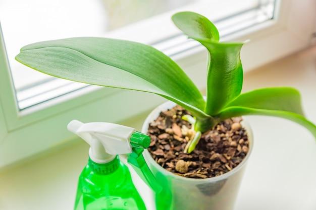 Mosorchidee in een plastic pot en spayer op vensterbank. kamerplant zorgconcept