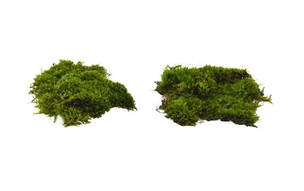 Moss geïsoleerd