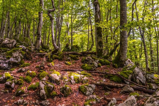 Mount aizkorri 1523 meter, de hoogste in guipuzcoa. baskenland. prachtig bos in opkomst. klim door san adrian en keer terug door de oltza-velden