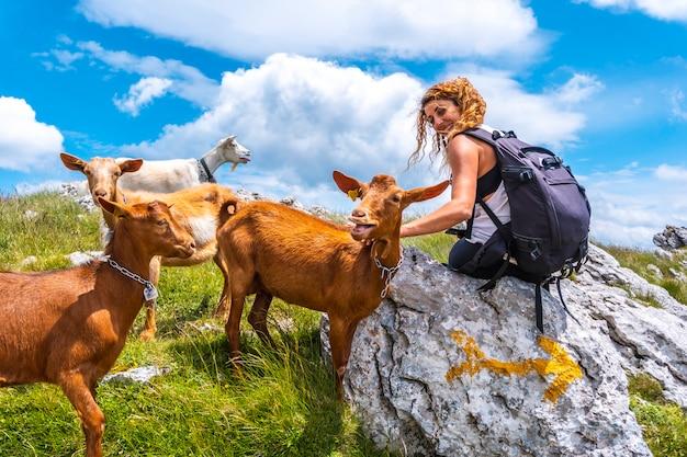 Mount aizkorri 1523 meter, de hoogste in guipúzcoa. baskenland. stijg op door san adrián en keer terug door de oltza-velden. een jonge vrouw naast enkele geiten op de top