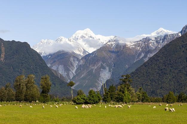 Mount cook mount tasman southern alps nieuw-zeeland