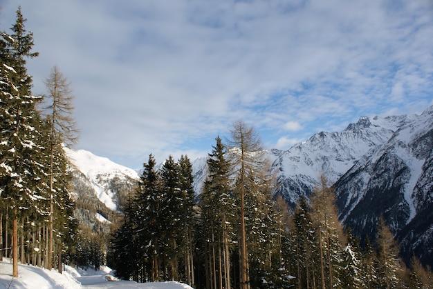 Mountain ski-parcours in het bos in de alpine bergen.