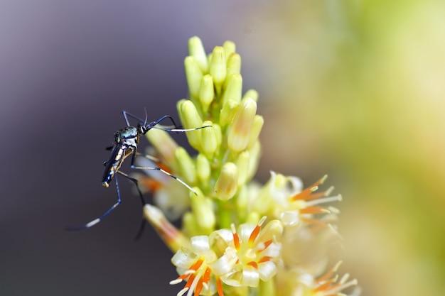 Muggen eten bloemen