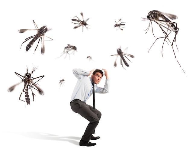 Muggen vallen aan