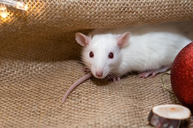 Muis zit op een jute