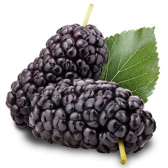 Mulberry geïsoleerd op een witte achtergrond