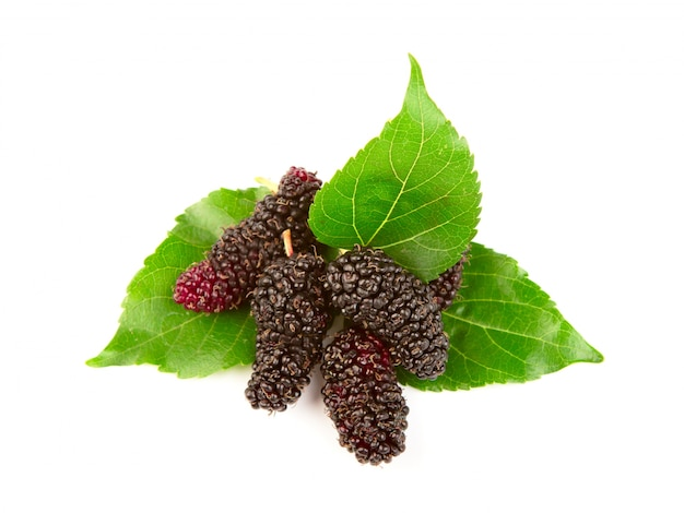 Mulberry met bladeren geïsoleerd op een witte achtergrond