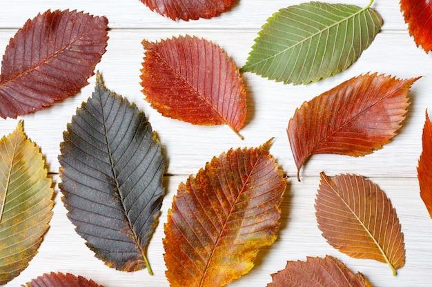 Multi-coloured iep bladeren op een witte houten tafel