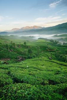 Munnar theeplantages met mist in de vroege ochtend