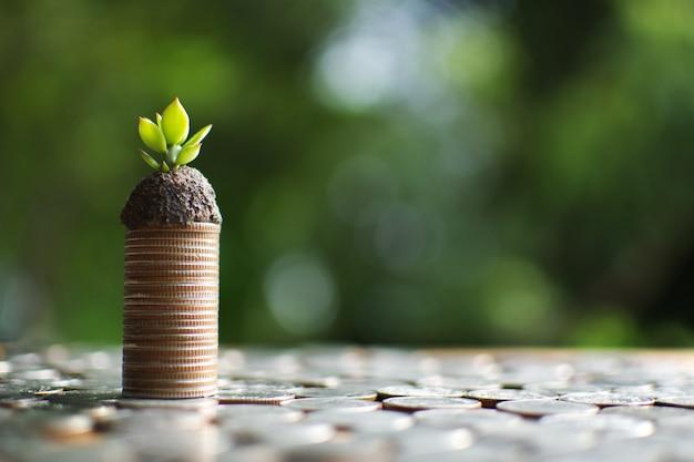 Munt met kleine spruit die geld aan succes plant