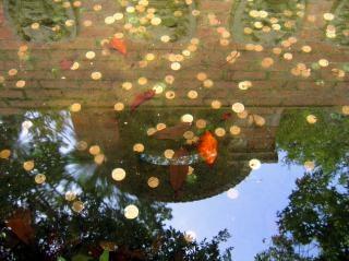 Munten in een fontein