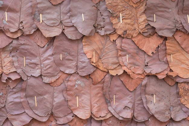 Muren gemaakt van teak bladeren, close-up en textuur van decoratieve droge bladeren op traditionele muur van cottage