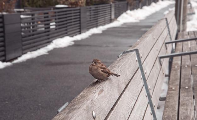 Mus op een houten bankje in een park