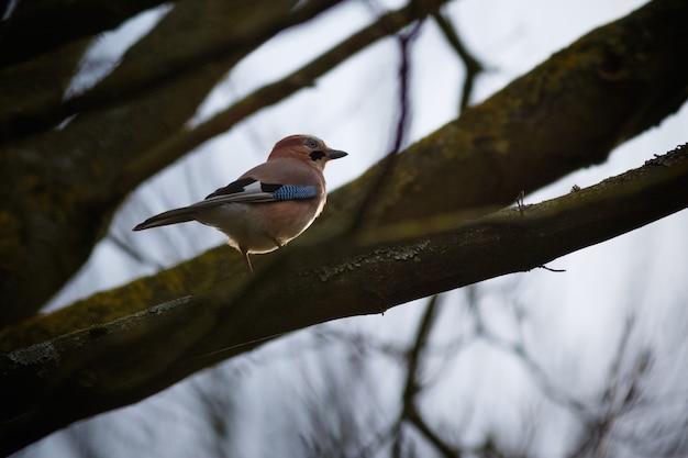 Mus zat op een boomtak